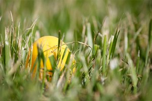 Yellow easter egg in real grass outside.