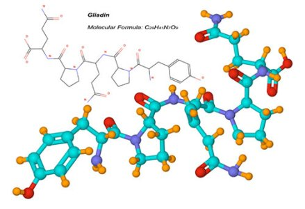Diagram of gliadin molecule