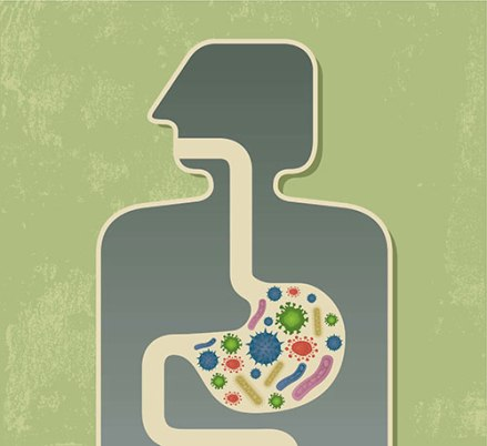Illustration of bacteria in the digestive system