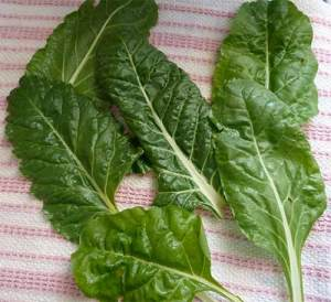 Fresh picked swiss chard leaves laying on a kitchen towel.