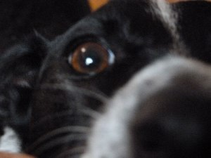 Close up of Milo's nose and eye looking in the camera.